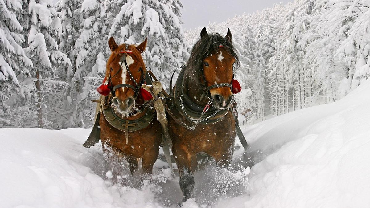 eventi inverno trentino alto adige