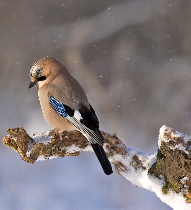 eventi natura inverno 2017 lazio