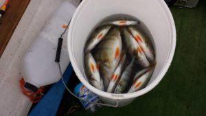 pesca lago di mergozzo
