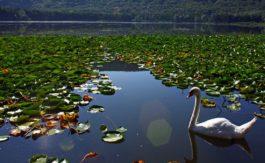 Lago_Basilicata