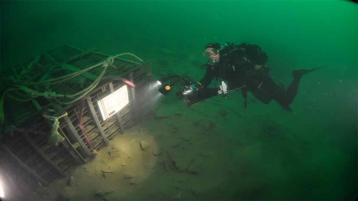vino-sott'acqua